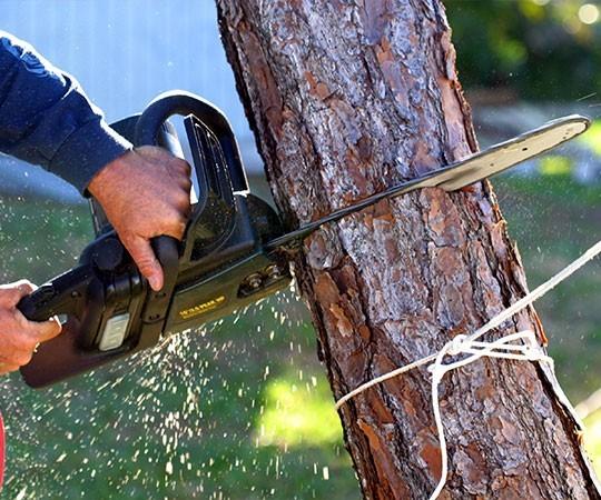 Спил деревьев в Томске и Томской области