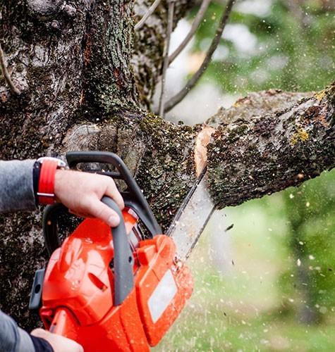Услуга по спиливанию деревьев в Томске